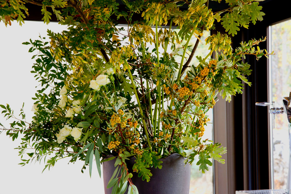 inesurquijo.cotoneaster