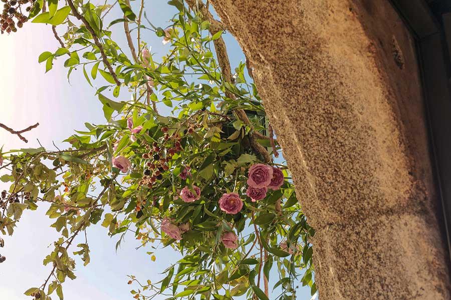 inesurquijo.flor.36