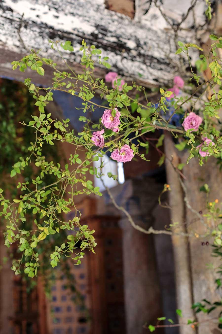 inesurquijo.flor.38