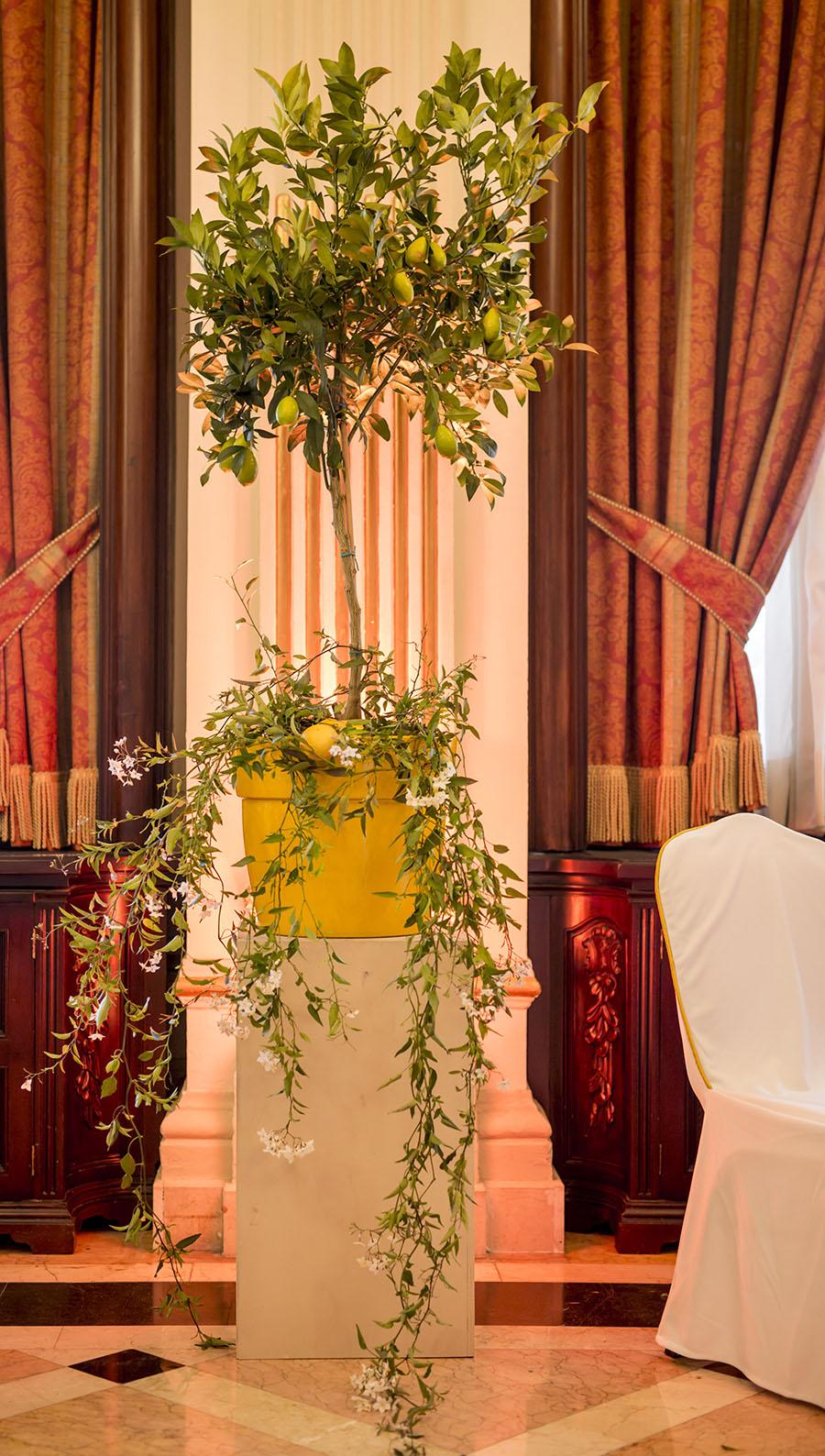 Ines Urquijo.Hotel Alfonso XIII_551